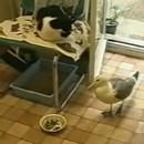 mouette-pique-gamelle-chat