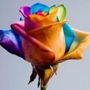 fleurs-colorees