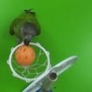 miniature pour 20 tours d'un perroquet en 2 minutes
