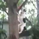 chien-grimpe-arbre