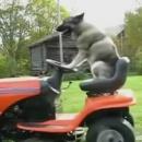 chien-tond-gazon