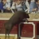 taureau-saute-tribunes