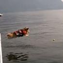 chien-saute-eau