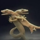 amour-salamandre