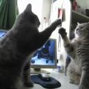 deux-chats-trois-petits-chats