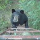 ours-grimpe-tour-garde