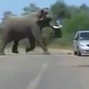 elephant-vs-voiture
