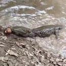 miniature pour Anguille électrique vs Crocodile