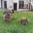 miniature pour Camouflage du chat sous l'herbe