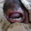 miniature pour Petit singe au visage bizarre