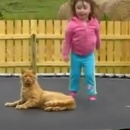 petite-fille-trampoline-chat