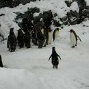 pingouin-content-neige