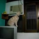 miniature pour Saut de chat Fail