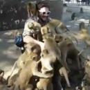 heure-nourrir-singes