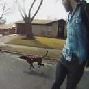 miniature pour Un chien tire son maitre en Skateboard