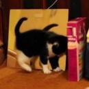 miniature pour Un chaton voit son reflet dans un miroir
