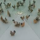 animaux-miroir
