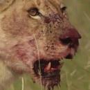 miniature pour 3 Hommes vs 15 Lions