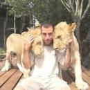 lions-calins