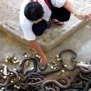 nettoyer-fosse-cobras