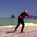ours-polaire-piste-ski