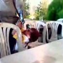 miniature pour Un bébé tire sur son père au pistolet