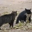 miniature pour Deux chats arrêtés par la police