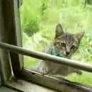 chat-passe-fenetre