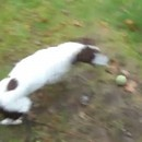 chien-joue-balle-seul