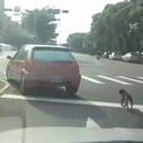 miniature pour Choc : Il traine son chien en voiture
