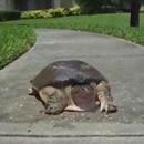 tortue-rapide