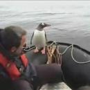 miniature pour Un pingouin chanceux !
