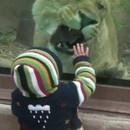 lion-essaie-manger-bebe-zoo