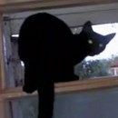 miniature pour Un chat qui aboie
