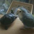 oiseau-aime-pas-tortues