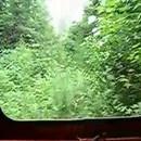 miniature pour Des rails cachés par les plantes