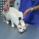 miniature pour Immobiliser un chat