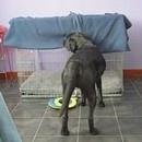 chien-couverture-dormir