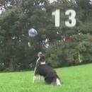 chien-joue-volley
