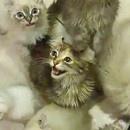 miniature pour Donner à manger aux chats en slip