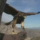 parapente-faucon