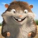 bob-hamster