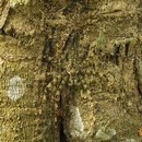 animaux-maitres-camouflage