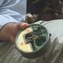miniature pour Aki, le démineur Cambodgien