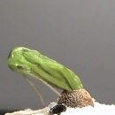 grand-insecte-miniscule-oeuf