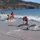 sauvetage-dauphins-echoues-plages