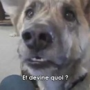 faire-parler-chien