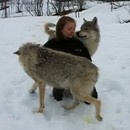 retrouvailles-loups-polaires