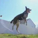 chien-saute-corde