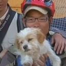 miniature pour Un chien a couru 1700km avec des cyclistes au Tibet